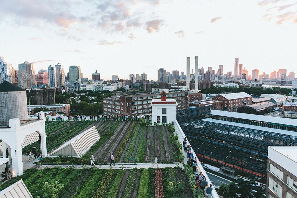 Brooklyn rooftop farm